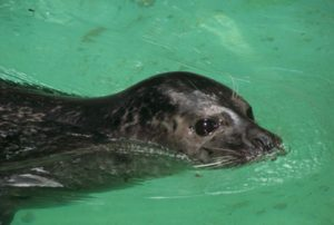 Westküstentierpark mit Robbarium